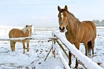 Na Pelechy a Pasečnici v úterý 25. března udeřila zima.