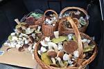 Nalezené houby zaslali: Barbora Kohoutová