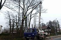 Z prořezávání a kácení stromů v Havlovicích. Pomáhala plošina i horolezecká lana.