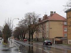 Lipová alej v Kozinově ulici v Domažlicích.