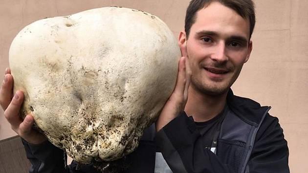 Unikátní úlovek pýchavky našel u Horšovského Týna nedaleko Šibeničního vrchu houbař Pavel Rubáš.
