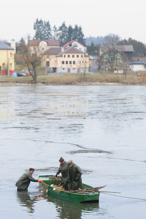 Výlov rybníka ve Všerubech.