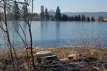 TŘI VRBY. Pohled na rybník se změnil. Odborná lesnická firma vysekala přestárlé topoly.