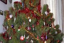 Bez vánočního stromku by nebyly správné Vánoce. Řada lidí však upřednostňuje před dárky pod ním zcela jiné věci.