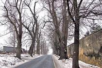 Trhanovská alej. Podle někoho jsou stromy lemující silnice nebezpečím pro řidiče, podle jiných přispívají k bezpečnosti například tím, že chrání vozovky před tvorbou sněhových jazyků a podobnými nepříznivými vlivy, jako je vítr a slunce.