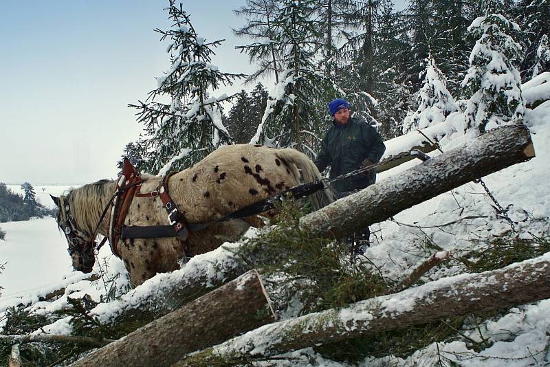 Jiří Foist pracuje s koňkou silou i v lese.