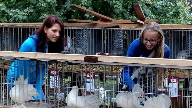 U ANGLICKÝCH PÁVÍKŮ. Třebaže přišly za králíky, se zájmem si tyto holuby prohlédly (zleva) Jana Romanová a Tereza Budská.