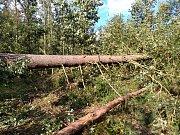 Stromy v lesním porostu u Horšovského Týna hodně utrpěly.