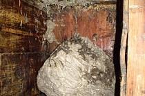 Vosy se v Postřekově zabydlely v úlu.