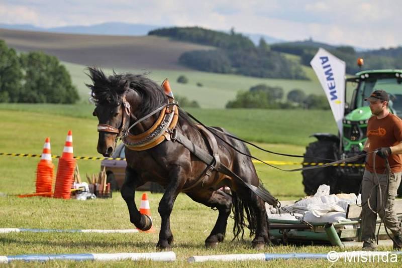 Jiří Foist se se svými koňmi účastní mnoha závodů a soutěží.