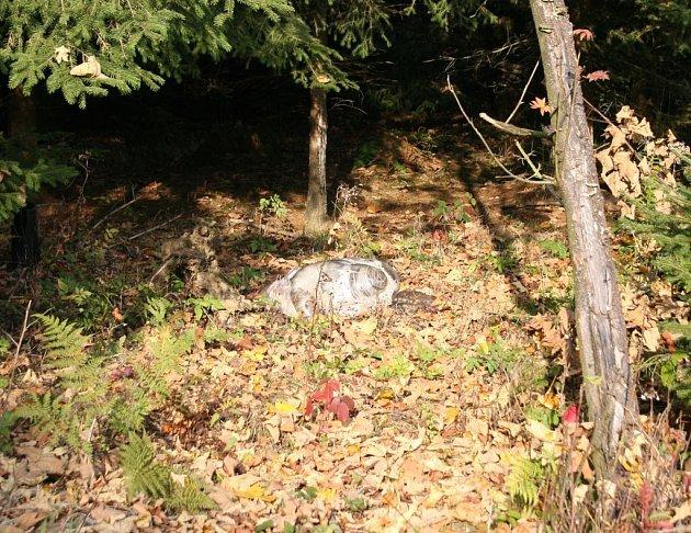 Zloděj nechal v lese vnitřnosti, kůži, hlavu i běhy telat.