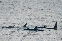 Americké námořnictvo omezí používání podvodních sonarů, výbušnin a dalšího vybavení, které má negativní dopad na život velryb či delfínů.
