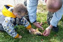 Z RYBÁŘSKÝCH ZÁVODŮ V BLÍŽEJOVĚ. Klučina sledoval, jak zbavují kapříka háčku. Předtím než rybu vrátili vodě, jí dal na rozloučenou ´pusinku´.