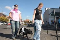 Psi slabozrakých a nevidomých by měli být od poplatků osvobozeni, myslí si většina lidí.