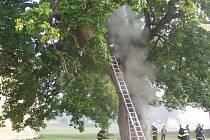 Požár památného javoru v H. Týně.
