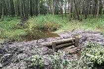 Lesníci spolu se zástupci Agentury ochrany přírody a krajiny ČR obnovili mokřady nedaleko Lesné.