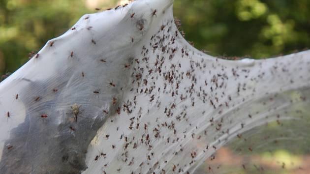 Pavouci v zámeckém parku.