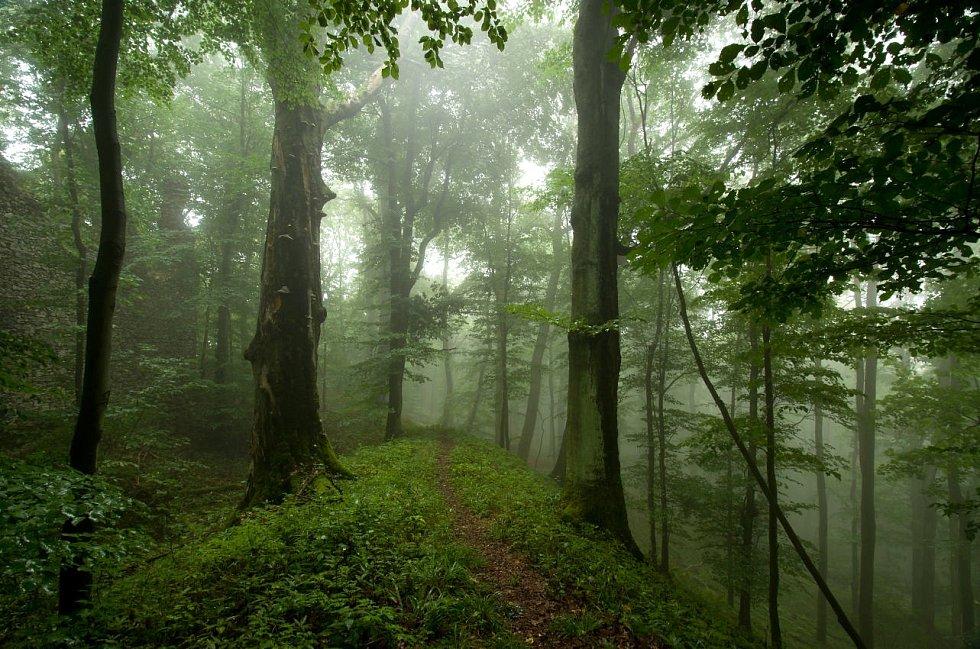 Karel Iha nejraději fotí v přírodě.