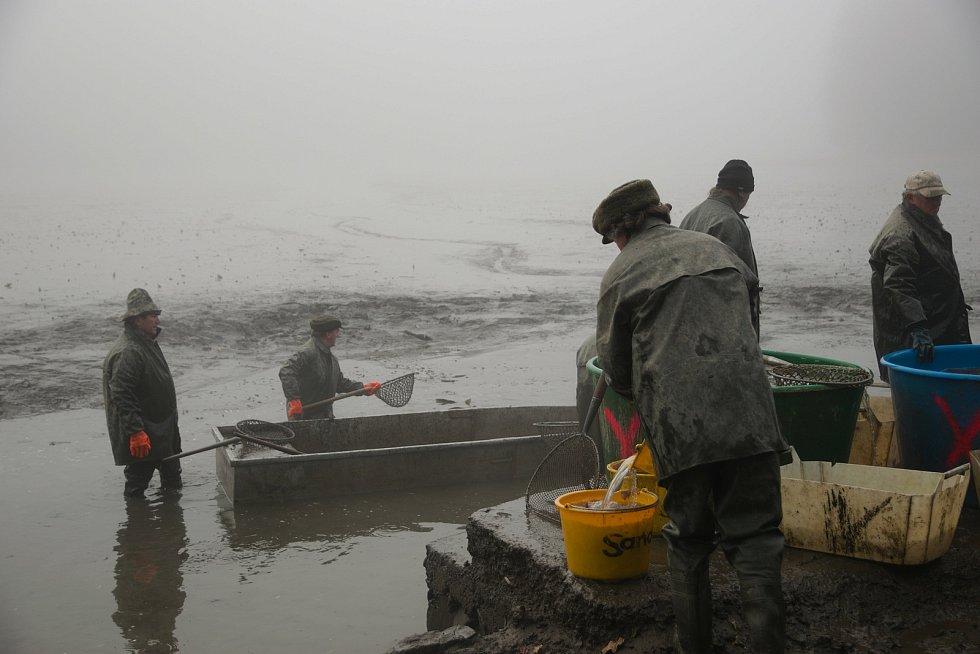 Černý rybník u Babylonu nadělil čtyři tuny ryb