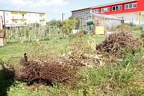 Změt trávy, větví a zrezlého pletiva zdobí zahrádkářskou kolonii v Sokolovské ulici v Holýšově.