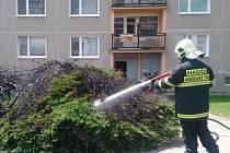 Požár keře v Horšovském Týně.