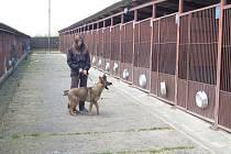 INSTRUKTORKA výchovy psů Veronika Greslová se svým svěřencem u kotců v domažlické chovné stanici služebních psů.