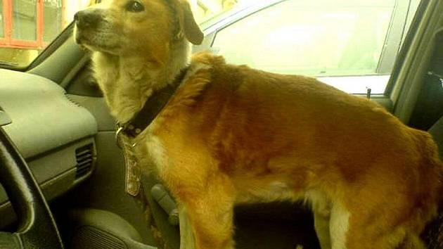Žádné domácí zvíře nesmíme nechat ve vedrech zavřené v autě, pokud je to možné, neměli bychom je ani převážet.
