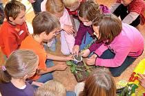 Žáci druhých až šestých ročníků holýšovské základní školy se v projektovém týdnu naučili, jak osadit truhlík a jak se starat o bylinky.