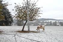 Zima letos přišla brzy.