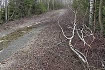 Po zdravých břízách zbyly jen pařezy a poházené větve
