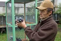 Josef Bouda ukazuje holuba z francouzského plemene Košua, který na kolovečské výstavě obdržel 96 bodů ze sta možných.