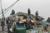 Hromadu ryb vylovili rybáři v Mezholezích