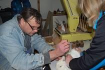 Stolní posuzování králíků v Horšovském Týně