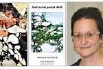 Sbírka Než začal padat déšť a její autorka Romana Schuldová.