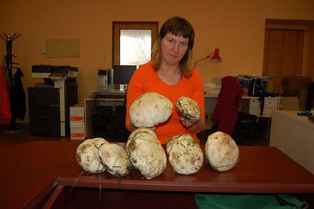ROSTOU! Pavlína Jelínková se pochlubila s úlovkem žampionů lesních.
