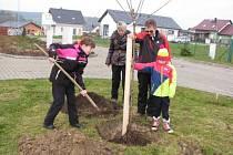 Výsadba nových stromů v Kvíčovicích.
