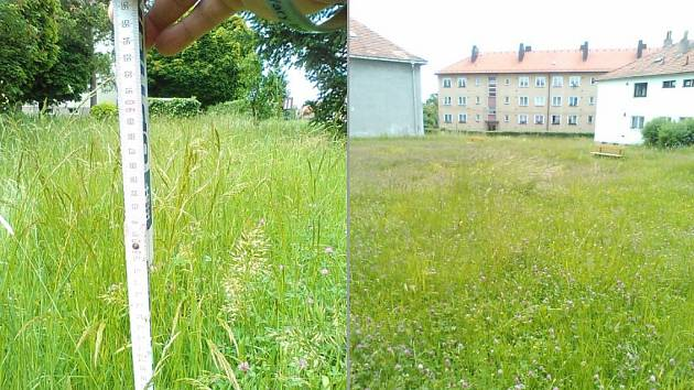 Zarostlé sídliště 28. října v Domažlicích.