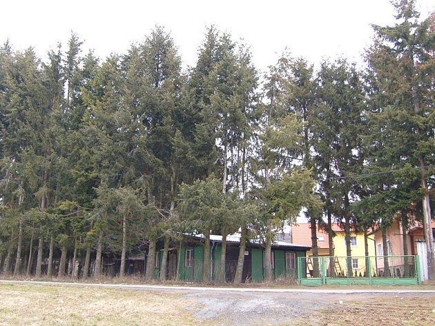 Vzrostlé stromy u myslivecké klubovny v Luženické ulici zasahují do elektrického kabelu. Hnilobou koruny se projevují dřívější neodborné prořezávky.