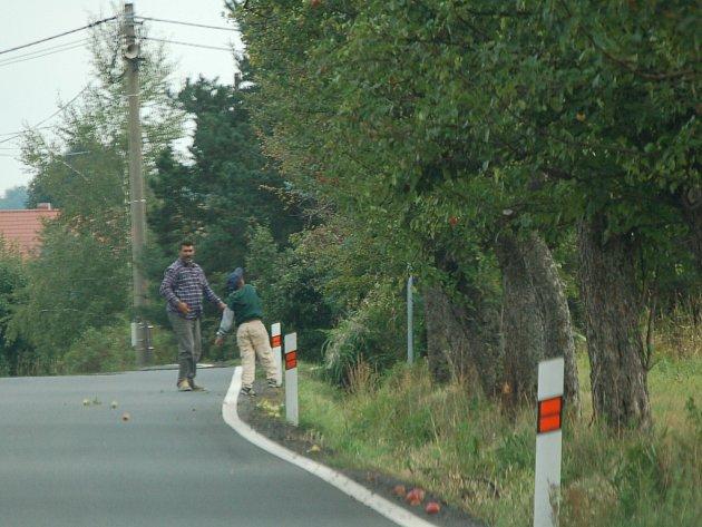 Česači ovoce na stromech u silnice.