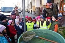 Na domažlickém náměstí před radnicí se dnes poprvé objevily ´vánoční´ ryby. Velkou radost z nich měly také děti z MŠ v Poděbradově ulici.