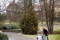 Horšovskotýnský zámecký park.