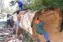 Kmen staré vrby musejí sochaři nejdříve zbavit kůry a upravit, aby se mohli pustit do uměleckého díla.