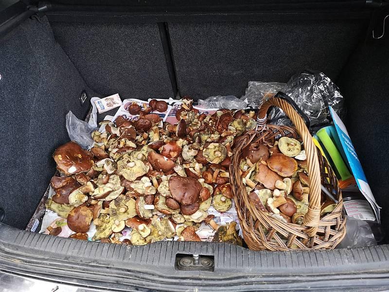 Nalezené houby zaslali: Nikola Fliegelová