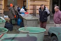 Tradičním Českým pokrmem při štědrovečerní večeří je ryba. Pracovníci Městských lesů v Domažlicích zahájili jejich prodej již minulý týden ve středu. Až do 24. prosince si zde můžete koupit kapry, amury, štiky, candáty či sumce.