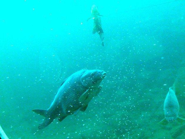 Z návštěvy Lomečku a pozorovatelny pod vodou.