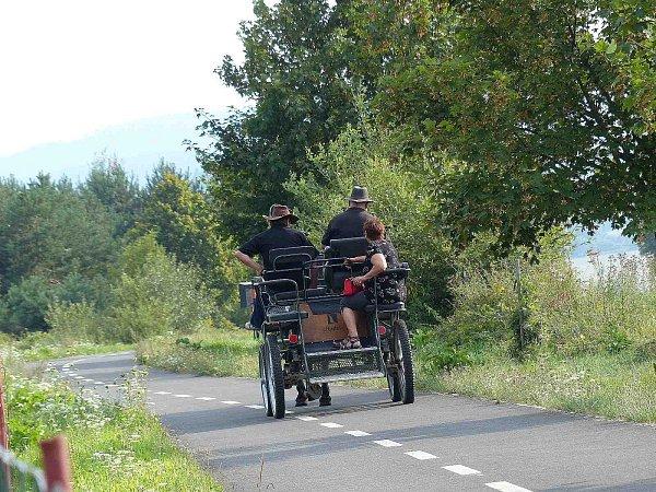 Koně na klenečské cyklostezce.