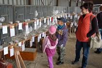 Výstava chovatelů v Meclově.
