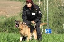 Ilustrační foto. Policejní služební psi jsou ostří, vycvičují je nejen k zadržení pachatelů, ale také k vyhledávání drog.