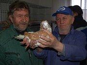 Vladimír Moudrý z Hlohovčic ukazuje na trzích ve Staňkově svého holuba Anglického pávíka.