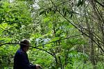 Některé rostliny mají až tři metry na výšku.